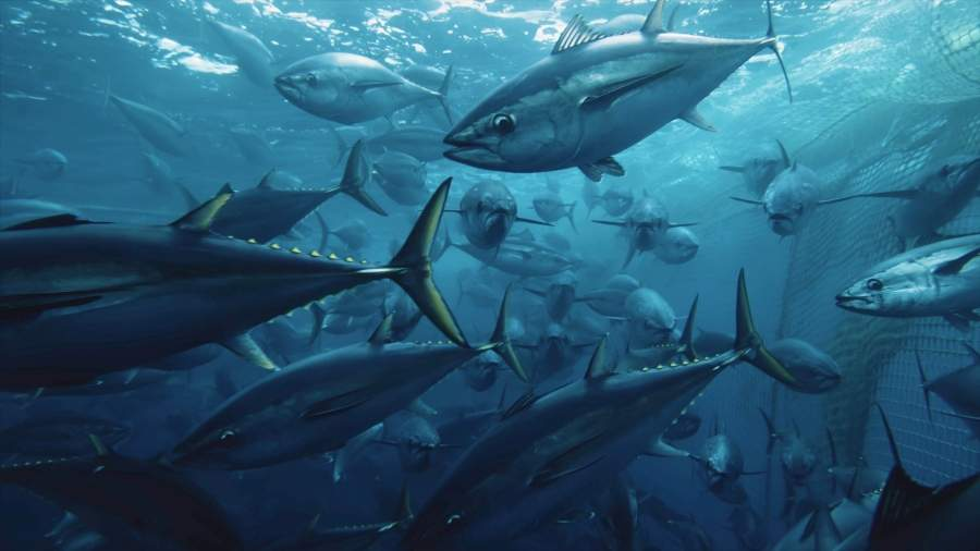 Seaspiracy: the controversial Netflix documentary revealing the darker side of industrial fishing